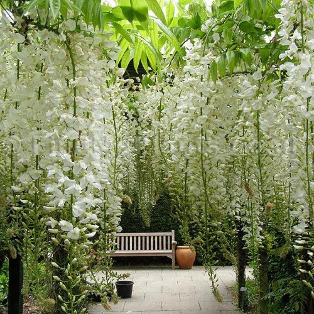 Hanging White Garden