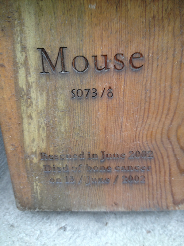 "English side of a memorial for a black bear named ""Mouse."""