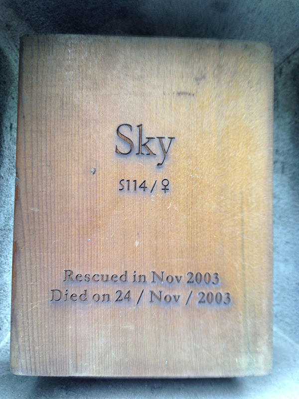 "English side of a memorial for a black bear named ""Sky."""