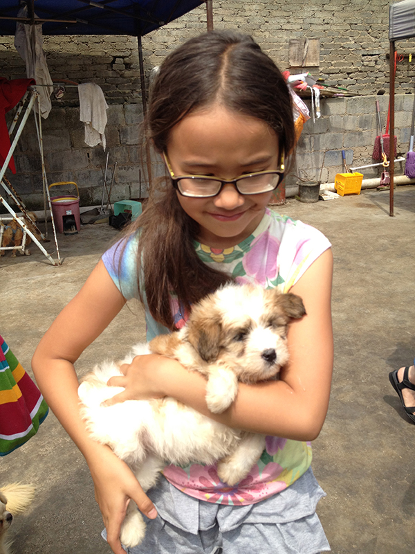 Dog Shelter at Guiyang