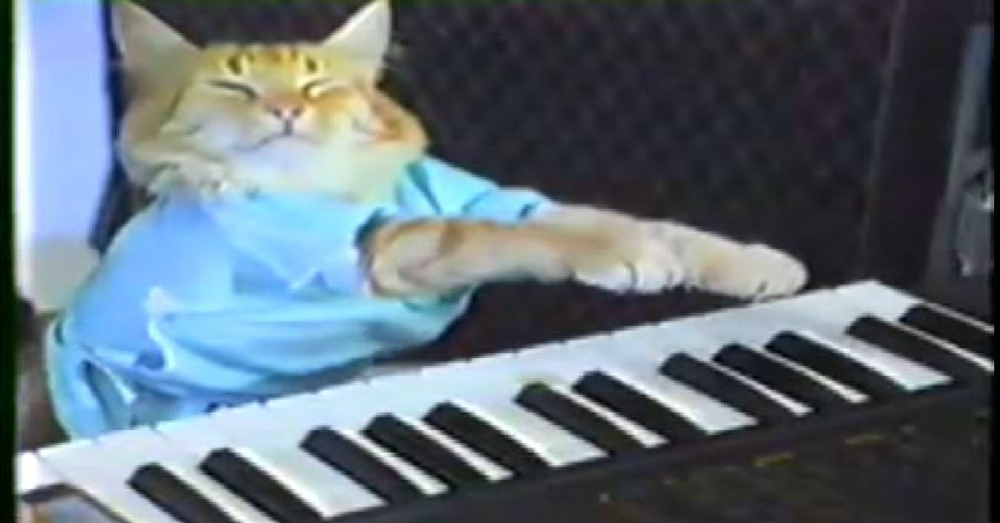 Everybody loves Keyboard Cat
