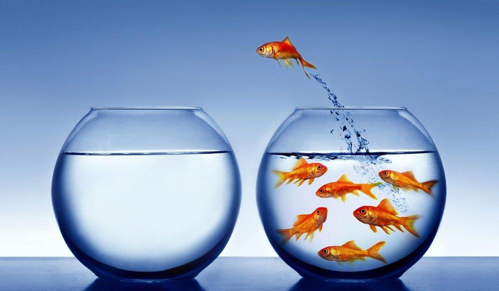 636134612419171432301912506_fish bowl odessy.jpg