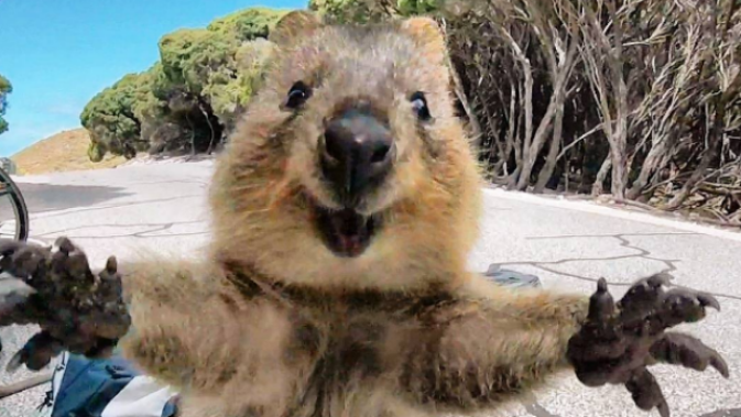 QUOKKAS are real!