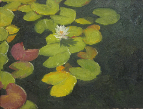 White Waterlily in Dark Pond, 2017