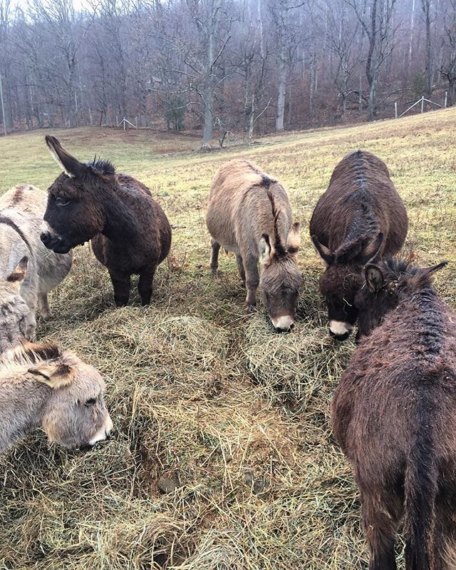 Field trip to visit some mini donkeys...yay!