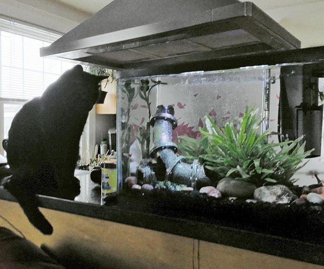 "Latest cast member, Rex, rehearses ""contemplating the inevitable"" scene. #catcasting #webseriescomingsoon #unsurepositive"