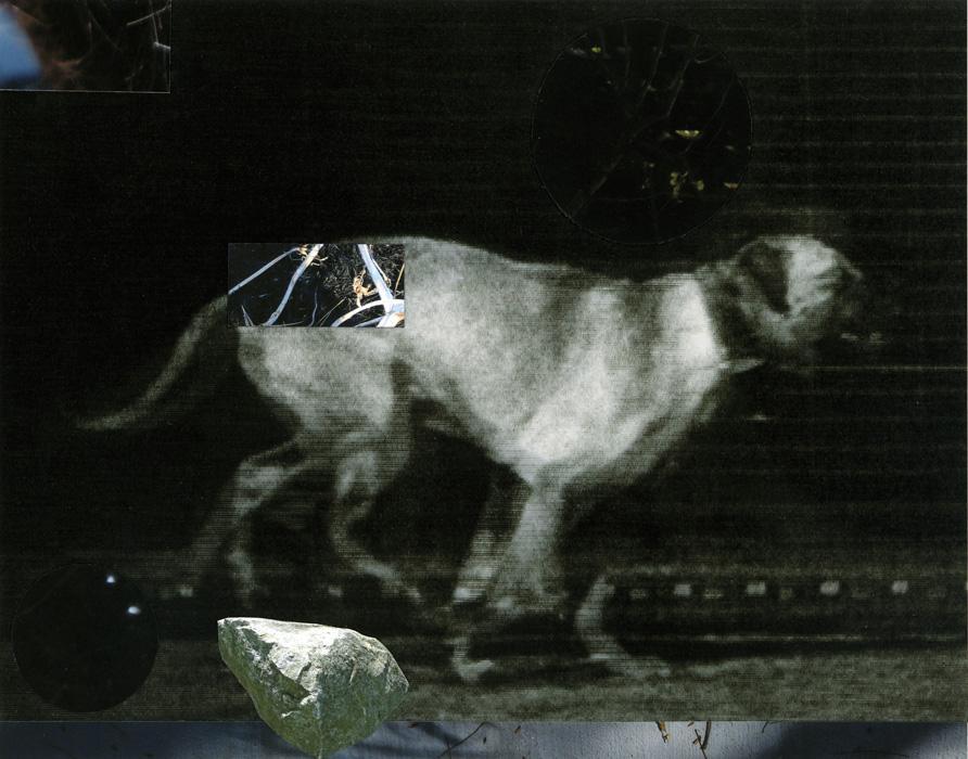 The Dog 3
