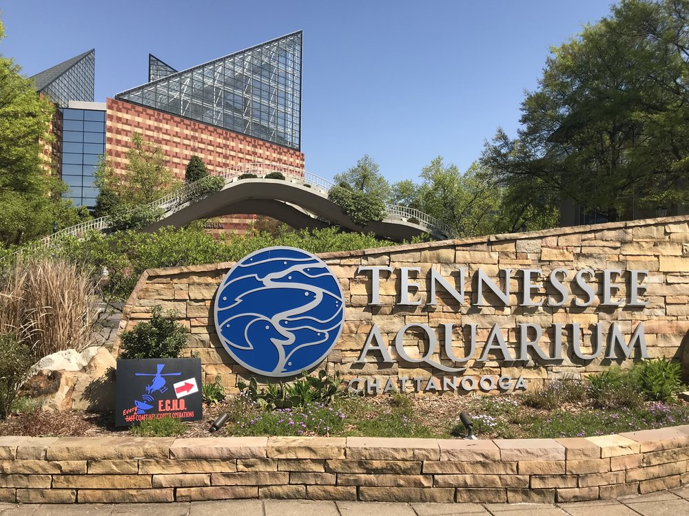 The Down For Weather Bash  - September 8, 2018 1800-2300Join fellow ECHO members for a night you will not soon forget!  We will be taking over the entire Tennessee Aquarium for our signature social event!  There will be FREE food & plenty of adult cocktails to go around!We will have live entertainment, drinks throughout the 4 story aquarium, and plenty of time to enjoy this tremendous opportunity with a guest!As ECHO is an organization that is also involved assisting our flight crew families, we welcome you to bring a guest to enjoy the luxurious evening under water!