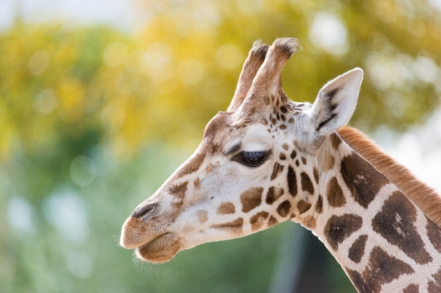 Zoo memberships for animal lovers? A match made in heaven.