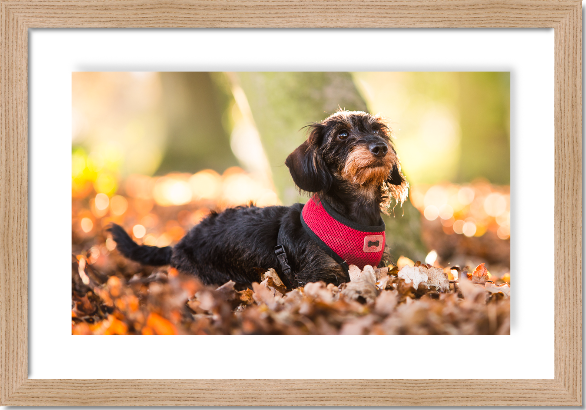 Framed dog photo gift