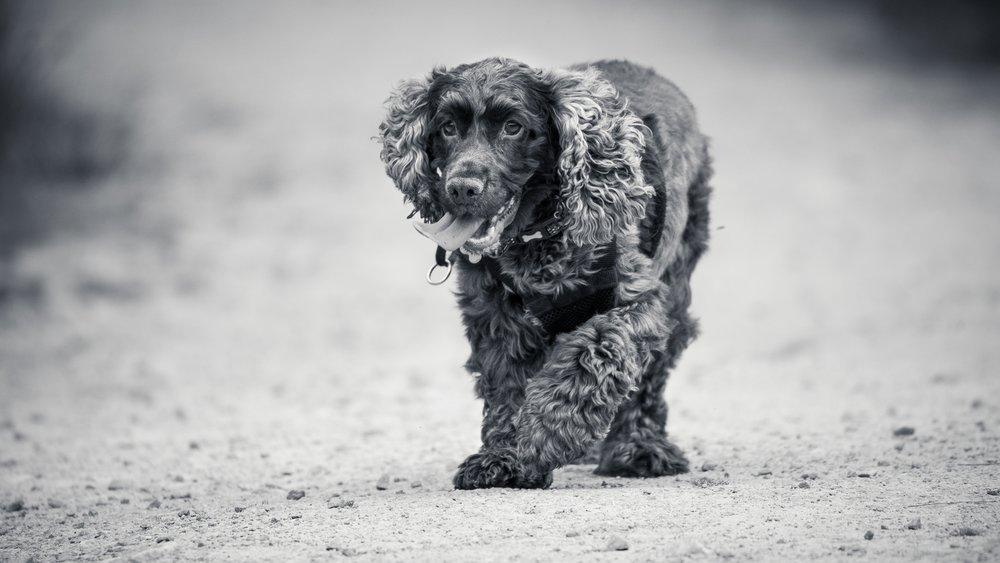 On location dog photography