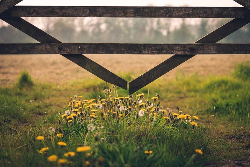 Look for seasonal touches like dandelions in a field.