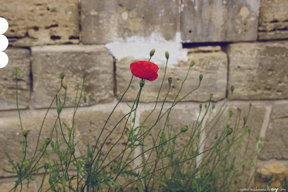 poppy_www.mademoiselleeuge.com.jpg