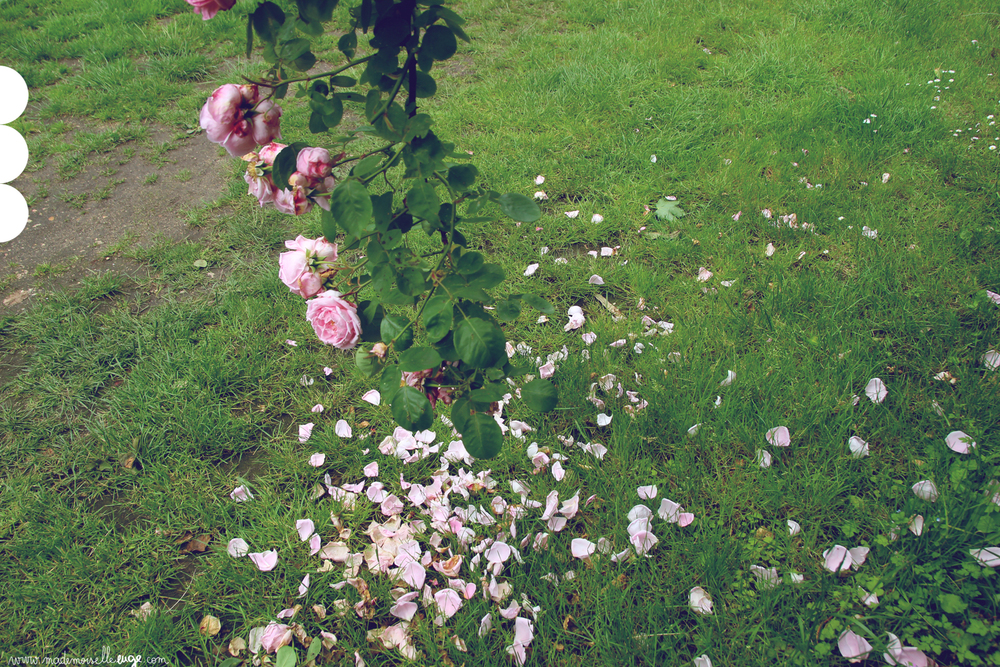 roses_www.mademoiselleeuge.com.jpg