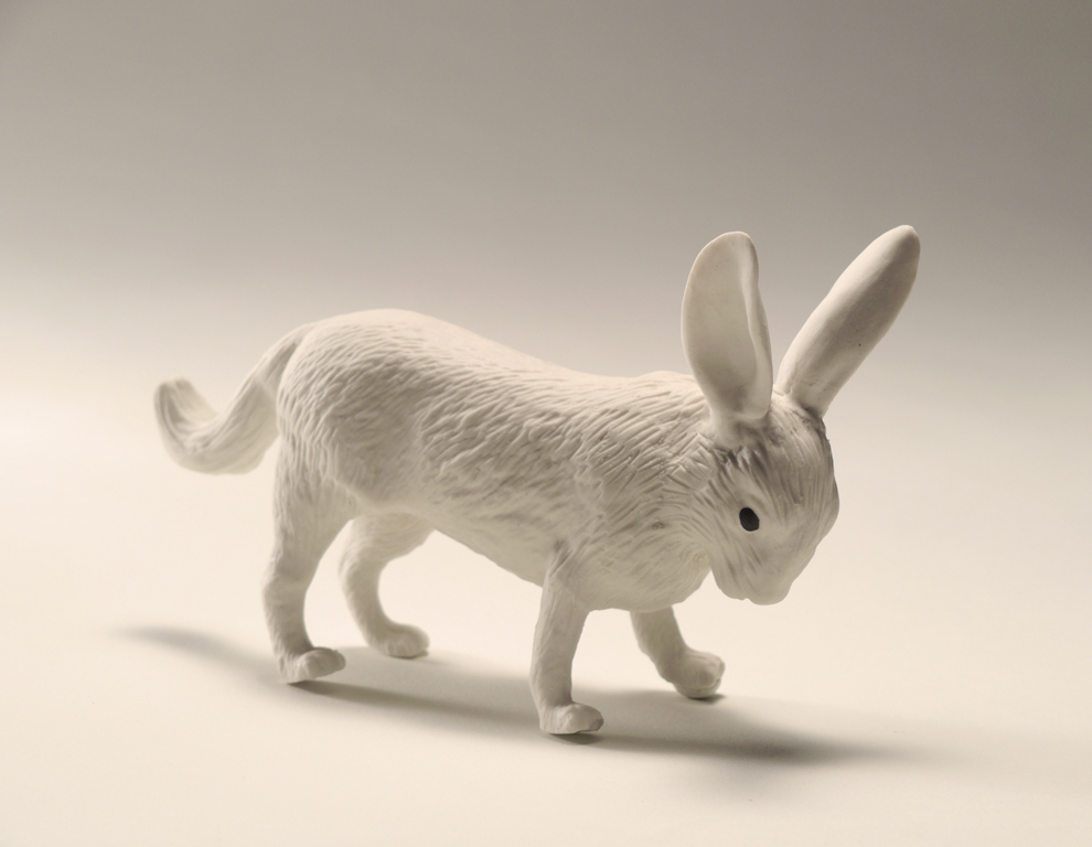 Rabbit Fox, 2013