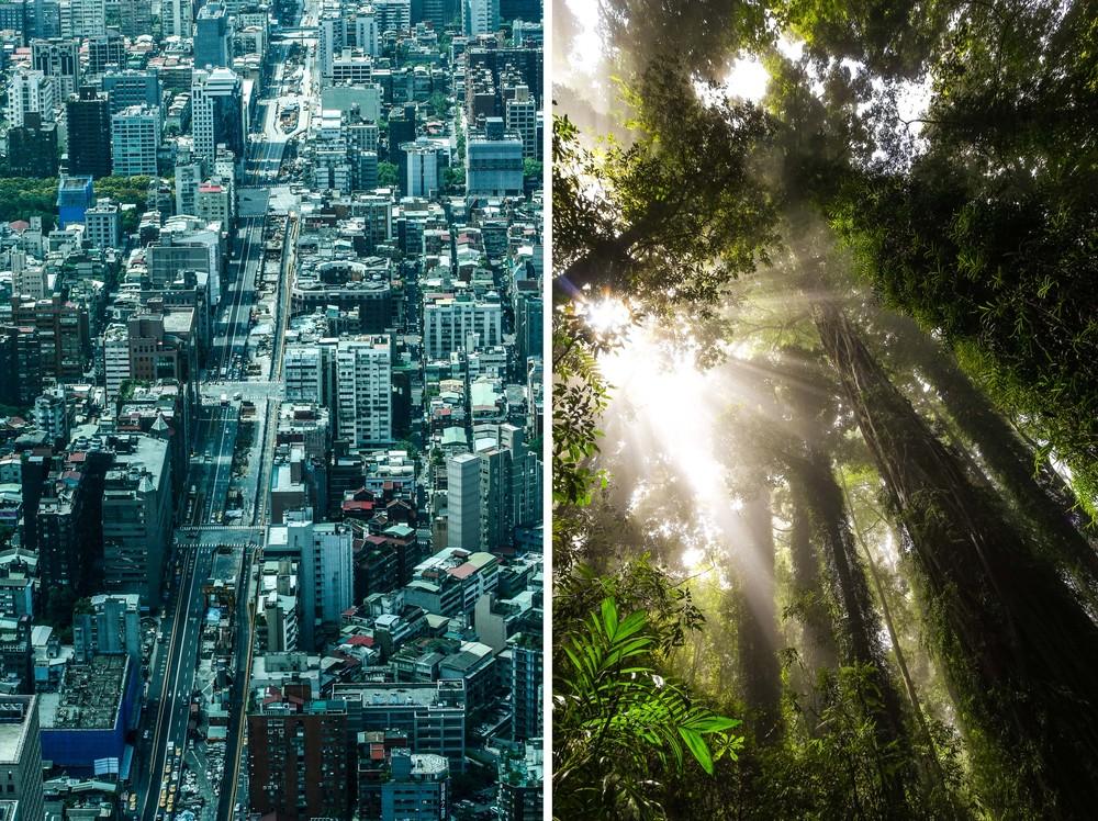 Taipei, Taiwan / Dorrigo NP, NSW, Australia