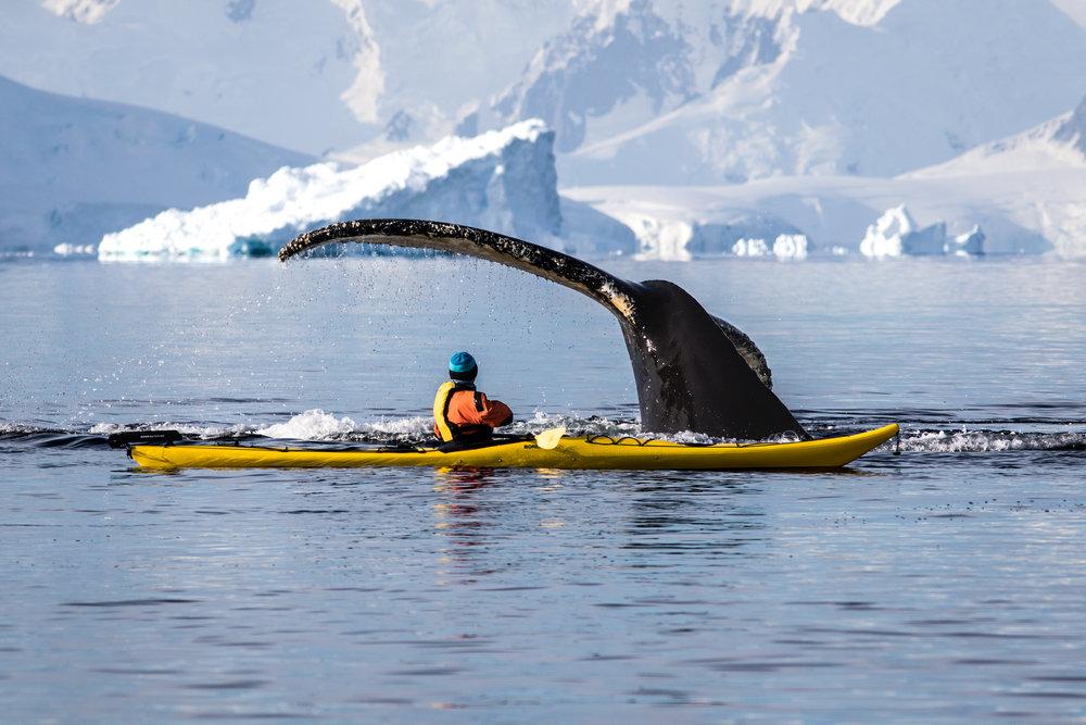 Jin & Humpback Whale, Gerlache Strait, Antarctica