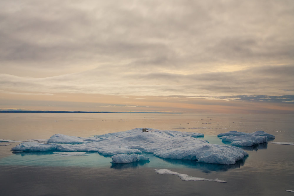 Polar Bear, Franklin Strait, NU. Canada