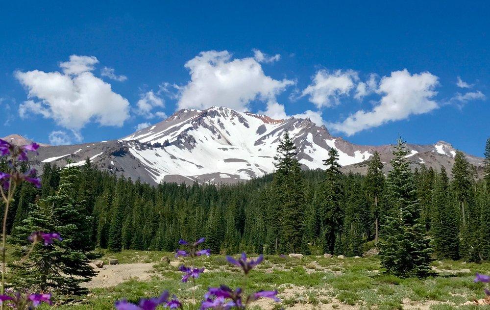 Bunny Flats Mt Shasta.jpg
