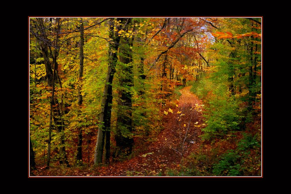 Lost Trail.jpg