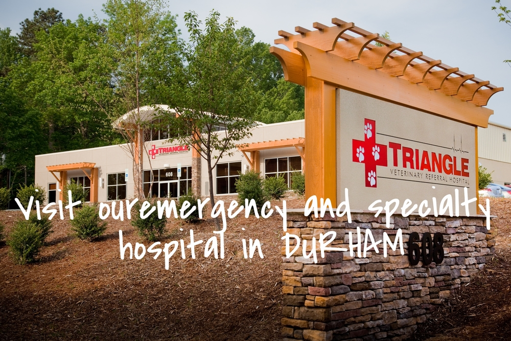 Visit our specialty and emergency location in DURHAM!