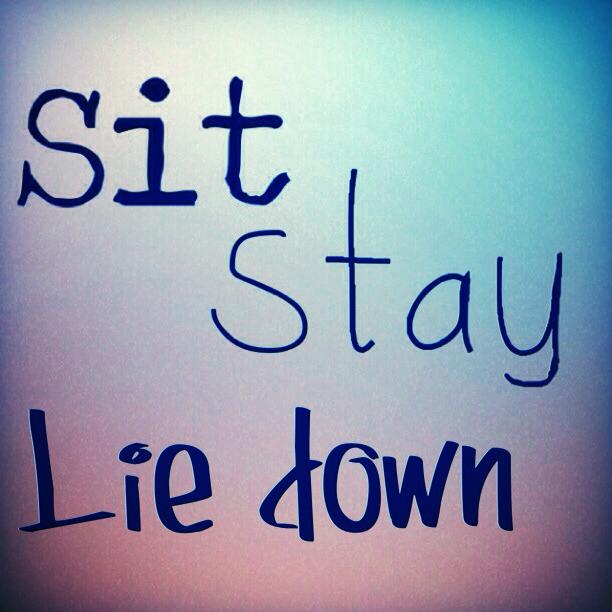 sitstayliedown.jpg