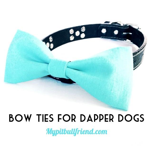 Dapper dogs.jpg