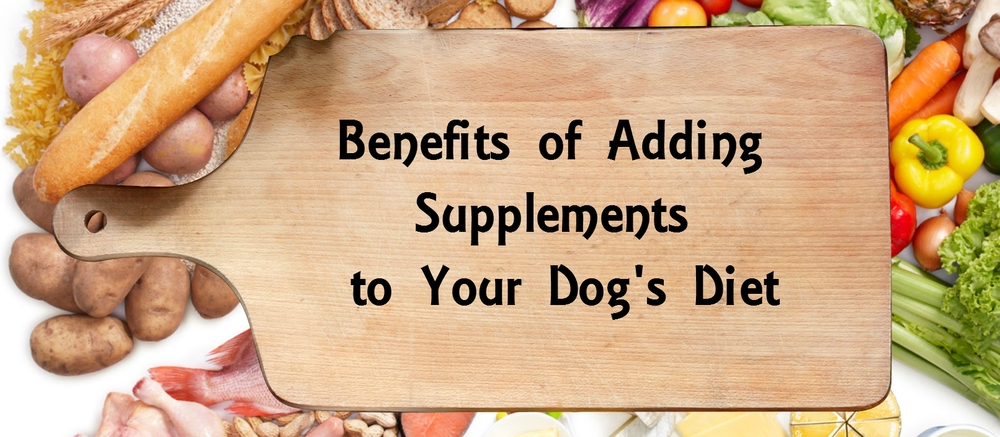 What Vitamins To Add To Homemade Dog Food