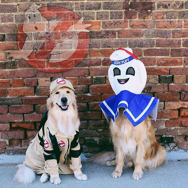 Ghostbuster dog costume : dog marilyn monroe costume  - Germanpascual.Com