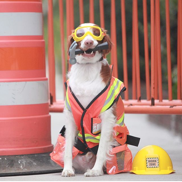 Construction dog costume