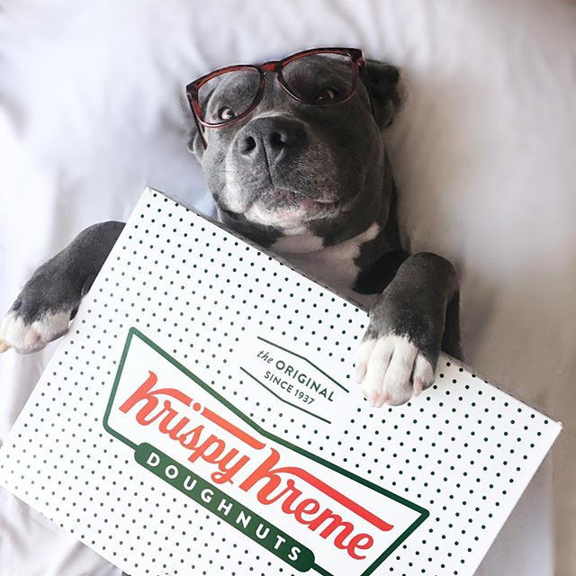 Dogs and Donuts make the world go round. Am I right? 🐶🍩