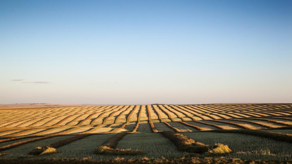 Tim Andries' Prairie 2.jpg
