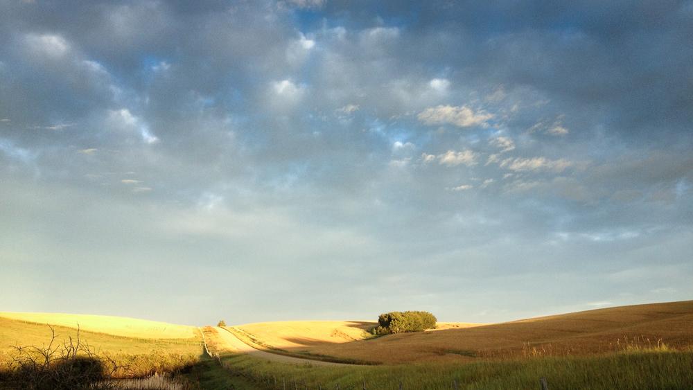 Tim Andries' Prairie 5_.jpg