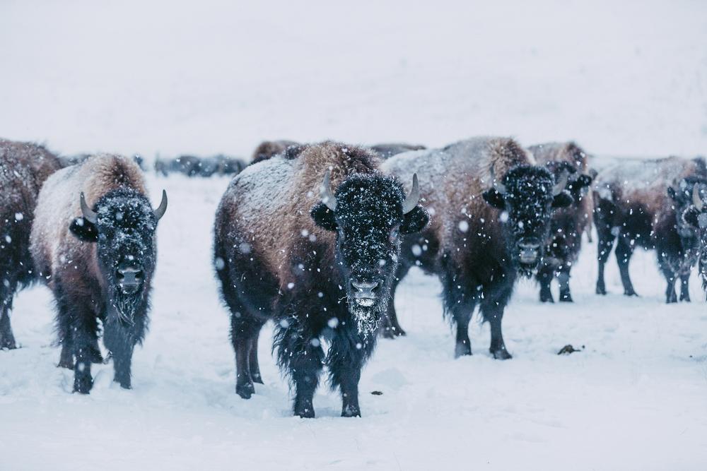 Montana 2.jpg