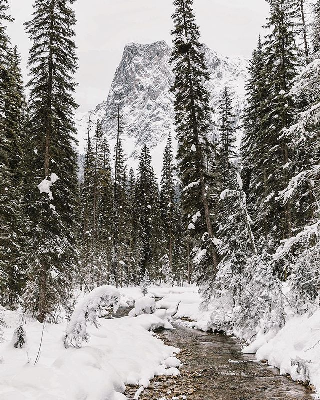 Winter in Canada. // photo by @davidguenther #greatnorthcollective