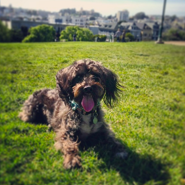 """Picnic, sunshine, and puppies: The 3 essential things to bring to Alamo Square"" #sumi"