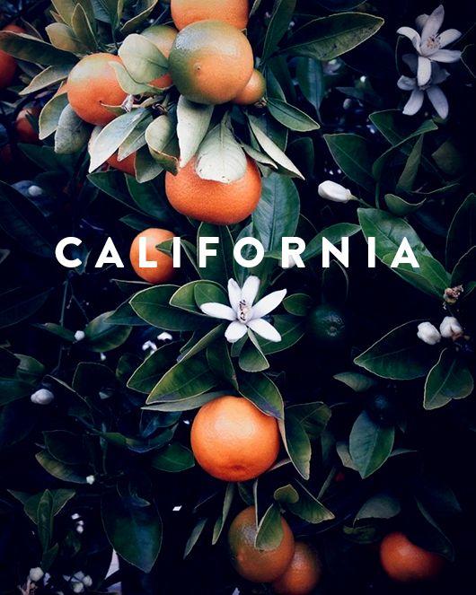 Blood Oranges + Lavender +Desert Nature Tones.