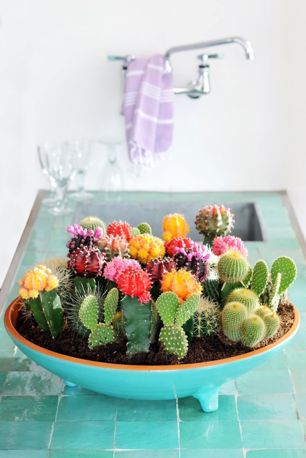 Multicolored Cacti are a nice surprise from the typical bouquet.