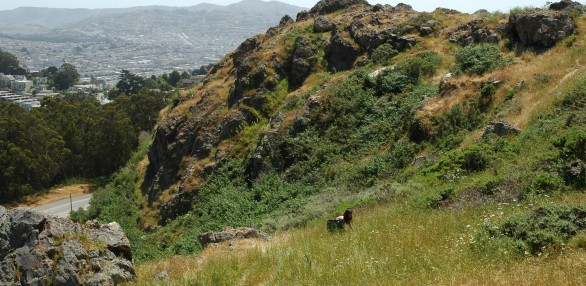Marked by a steep cliff towering above O'Shaughnessy Boulevard, O'Shaughnessy Hollow boasts some of the most beautiful grasslands and dramatic terrain in the city.