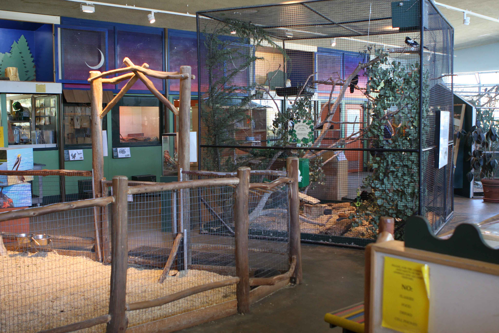 Located within Corona Park, the Randall Museum focuses on the arts, crafts, sciences and natural history.