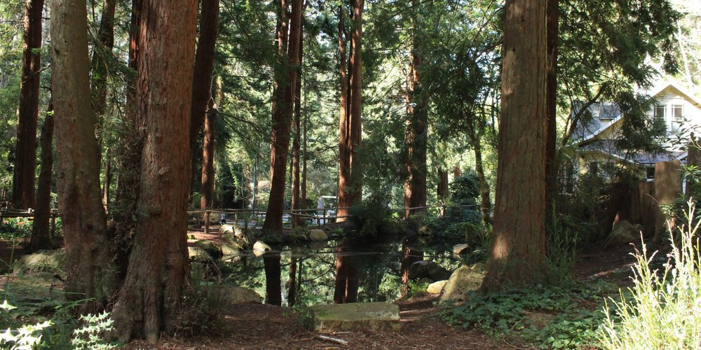 Pine Lake Park provides habitat for a variety of migratory bird species. It's also home to a popular dog park, as well as a trail that encircles one of San Francisco's remaining natural lakes and winds through Stern Grove.