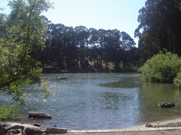 Pine Lake Park provides habitat for a variety of migratory bird species. It's also home to a popular dog park and a trail that winds through Stern Grove.
