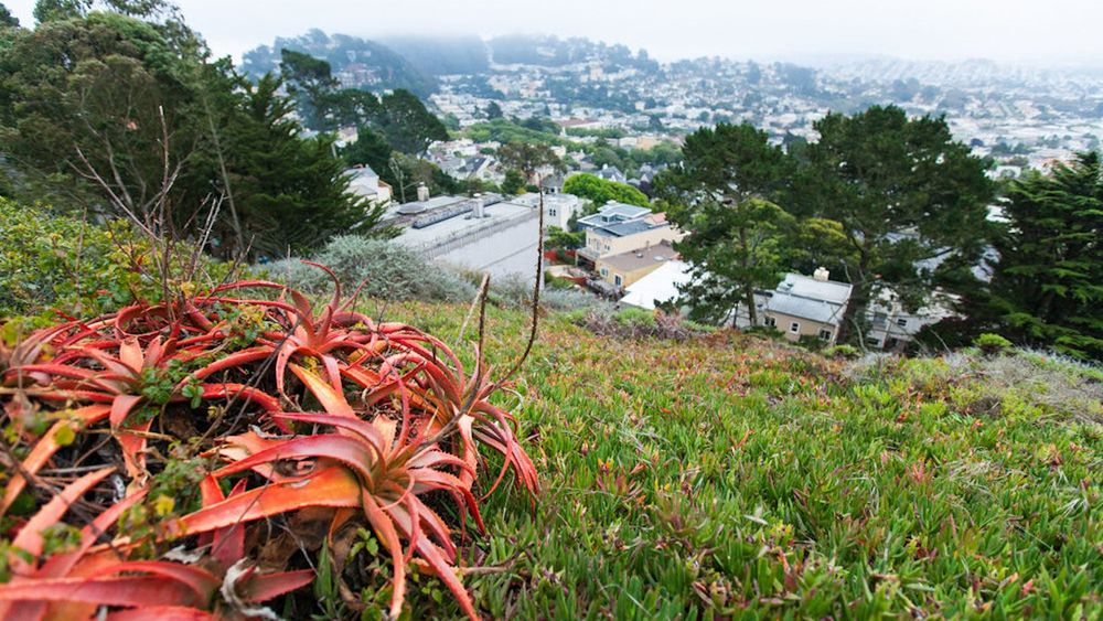 One of San Francisco's hidden gems, Hawk Hill Park is a magnificent remnant hilltop dune with ocean views of southwestern San Francisco.