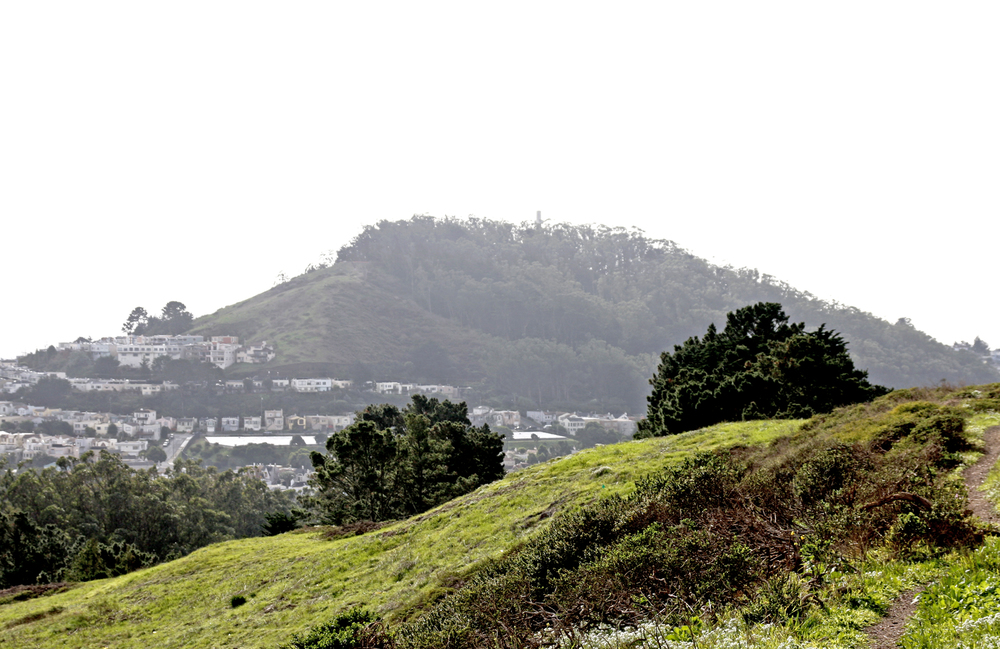 Mount Davidson Park is a wooded area at the city's highest peak that features walking trails and sweeping urban vistas.
