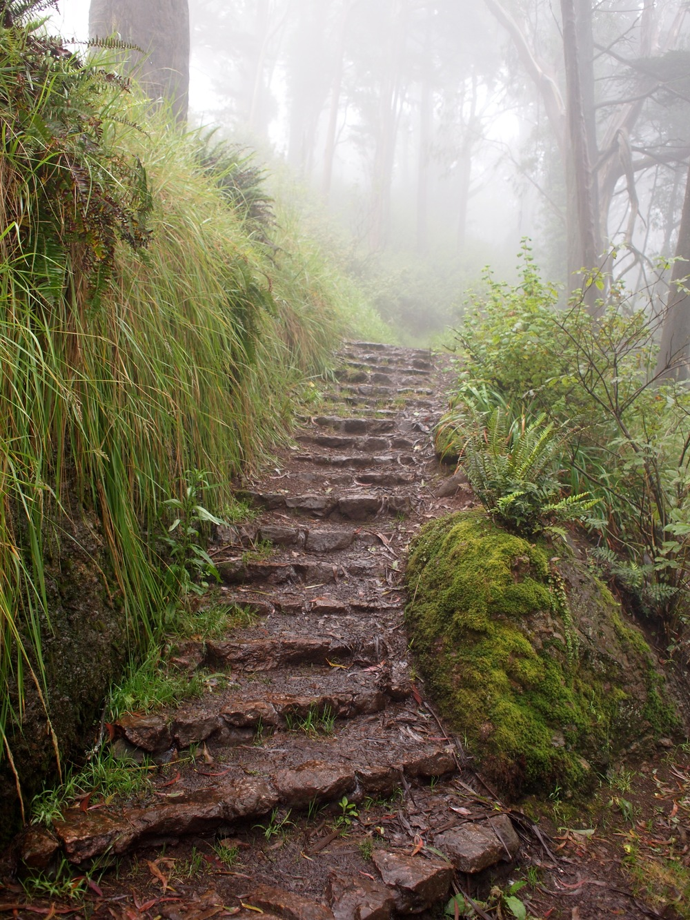 The steps leading up to Mount Davidson at Juanita Way offer a great hike with breathtaking views.