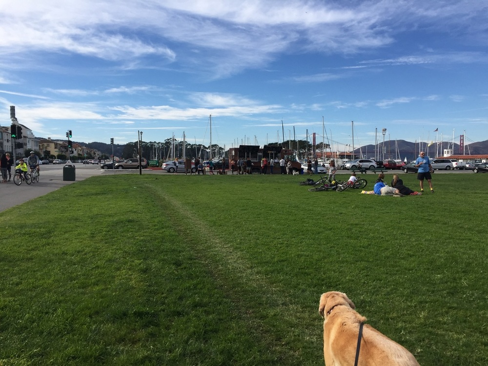 Marina Green is a large grassy area where sports events and fairs regularly take place. It's also a great spot for runners to warm up.