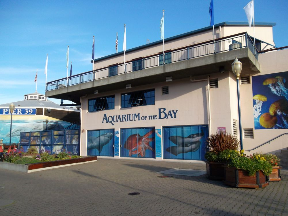 At the edge of Pier 39, the Aquarium of the Bay is focused on local aquatic animals from the San Francisco Bay and neighboring waters.