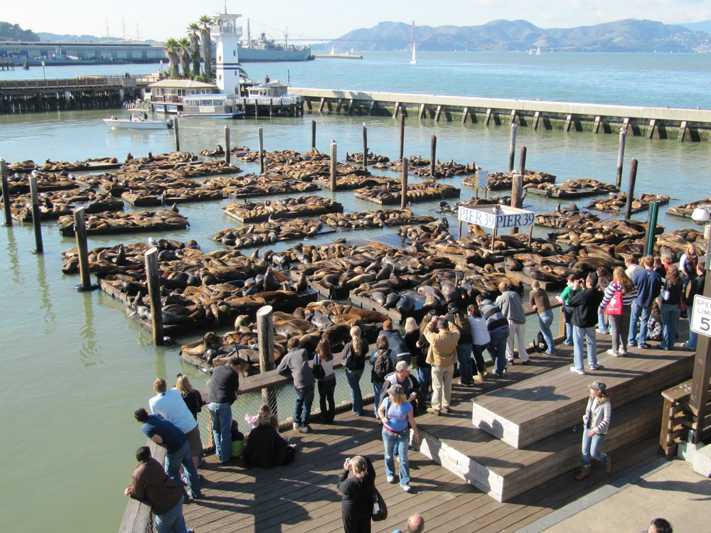 "The sea lions, which started arriving shortly after the 1989 earthquake, have been endearingly called San Francisco's ""Sea-Lebrities."""