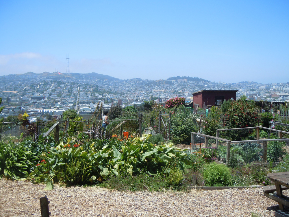 Established in the early 1970s, the Potrero Hill Community Garden is maintained by local residents using organic methods.