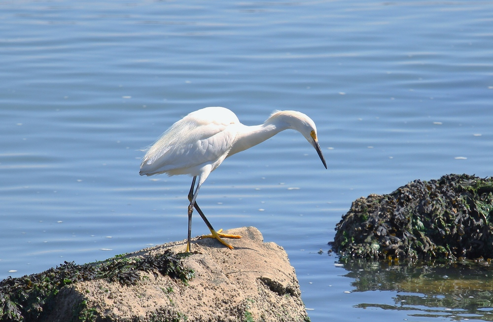 One of San Francisco's ecological treasures, Heron's Head Park is teeming with native plants and a wide variety of birds.